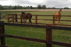 c-g-horses